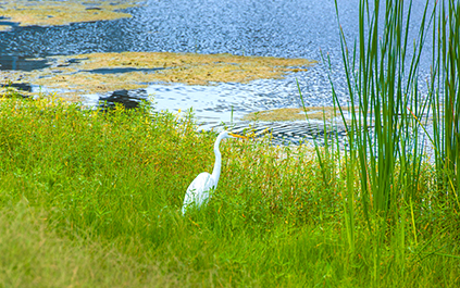 Environmental Awareness Egret Bayou