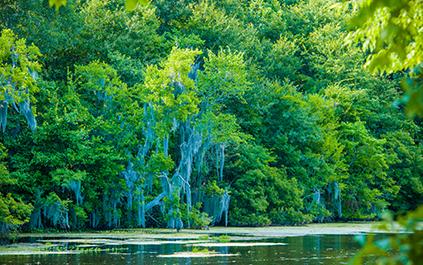 Environmental Awareness Louisiana Bayou